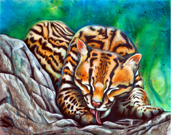 ocelolt, wild life painting, artist Robin Moulyn