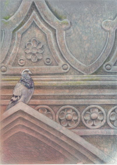 pigeon at church