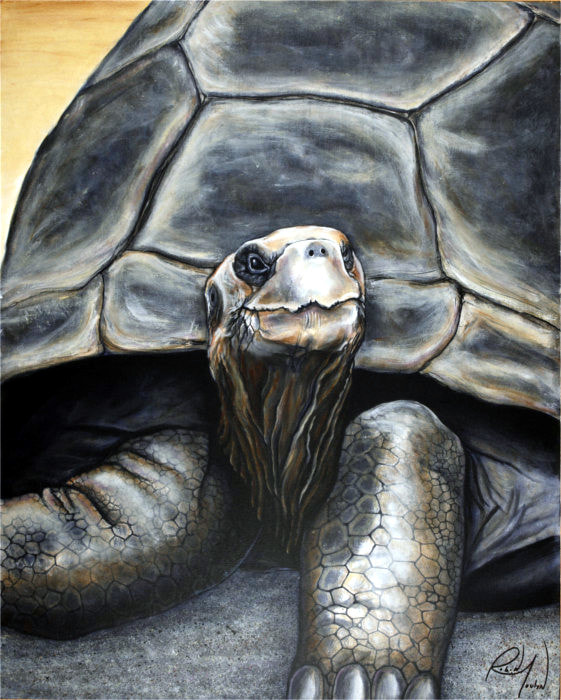 tortoise, galapagos tortoise, wild life painting, artist Robin Moulyn